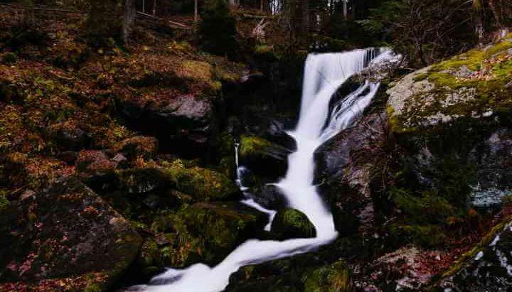 Izvor vode u šumi
