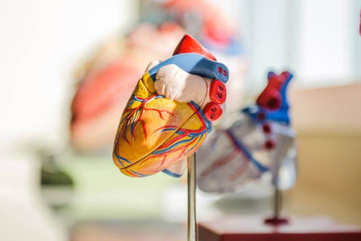 Veštački primerak srca